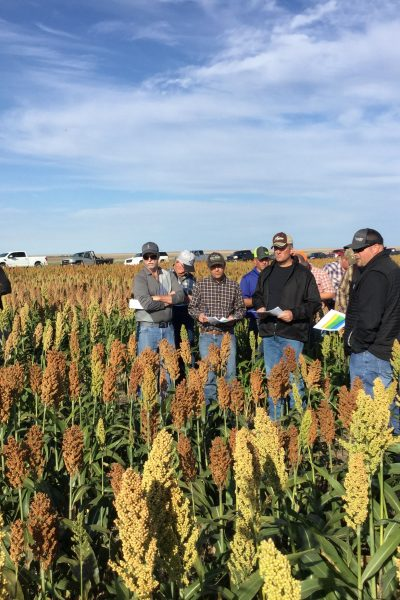 Sorghum Field Day