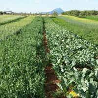 swcrc_cropcover_trial