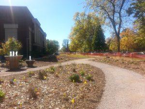 Photo of plants establishing after transplant into new Perennial Demonstration Garden