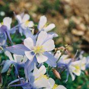 Flowers Misc 014