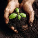 plant sprouting in soil