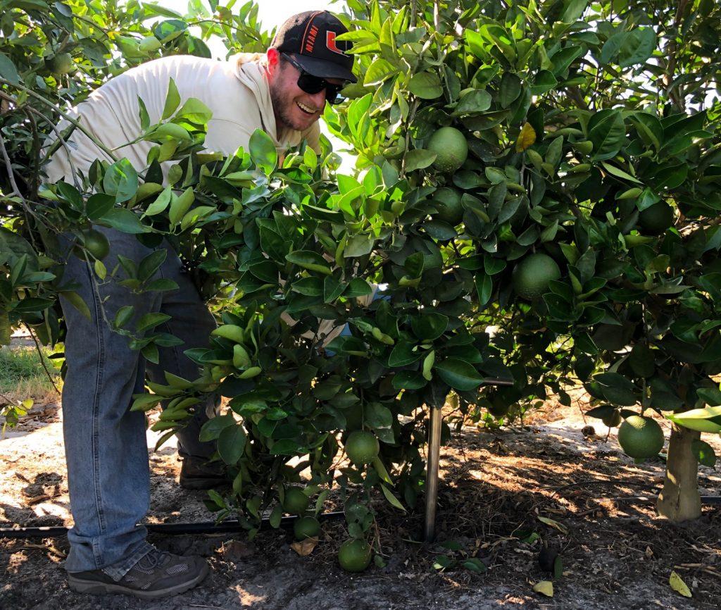 Sean taking soil samples at a citrus grove in Venus