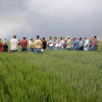 Colorado Wheat Field Days at wheat variety trial site.