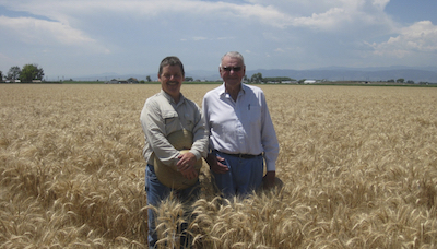 Scott Haley and Byrd Curtis in seed production field of Byrd HRW (2012)