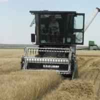 CSU Crops Testing Program combine harvesting a variety trial.