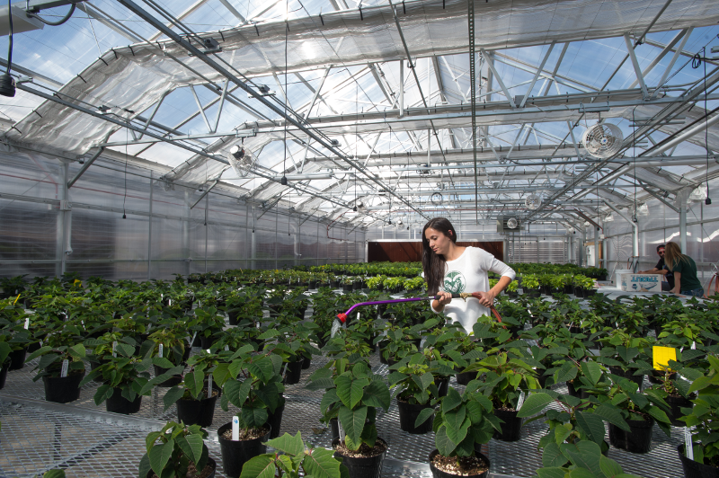 student watering plants in greenhouse